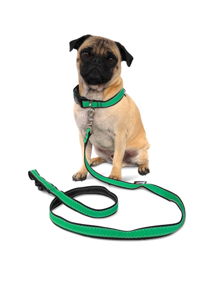 Hooley Dog Leash-34