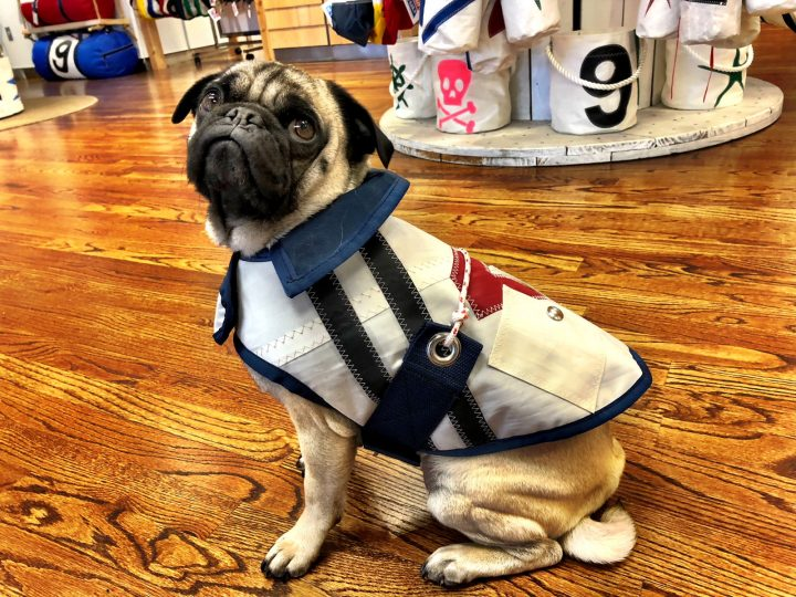 All Sail Dog Jacket-1539